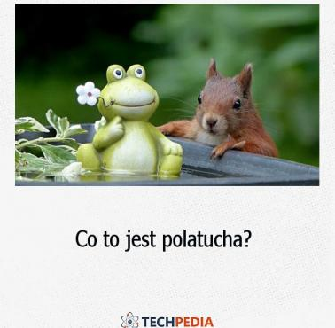 Co to jest polatucha?