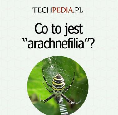 "Co to jest ""arachnefilia""?"