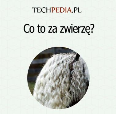 Co to za zwierzę?